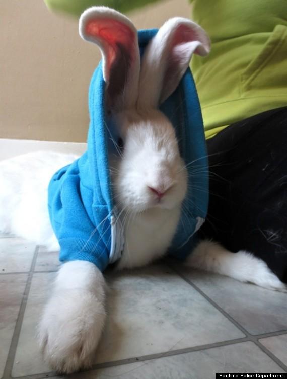 abducted rabbit bonnie hoodie