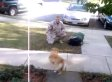 Dogs Welcome Their Soldier Owners Home (VIDEO)