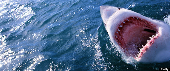 white sharks endangered species list