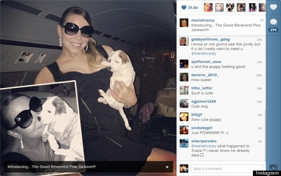 Classy Puppies Huffpost Mariah Careys Puppies Have Ridiculously Elaborate Names Because Of