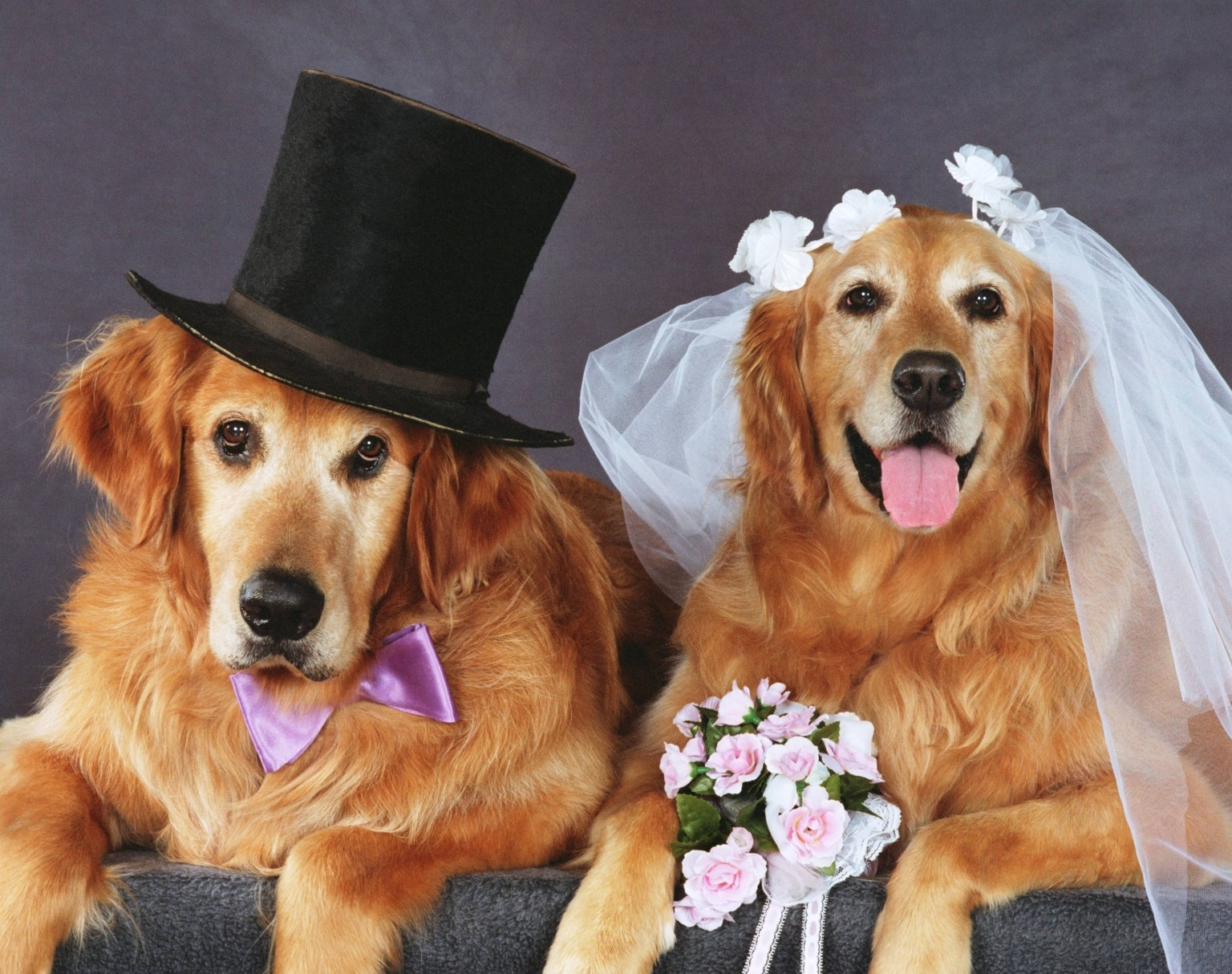 10 Things I Learned From My Dog's Fundraiser Wedding