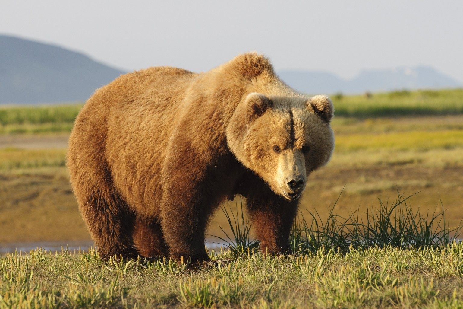 Hunt For B.C. Grizzly That Attacked 2 Men Called Off