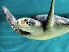 Why You Should Travel Through Life At A Sea Turtle's Pace