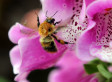 Bee Facts: Interesting Tidbits About The Buzzers, And How You Can Save Them From Disappearing