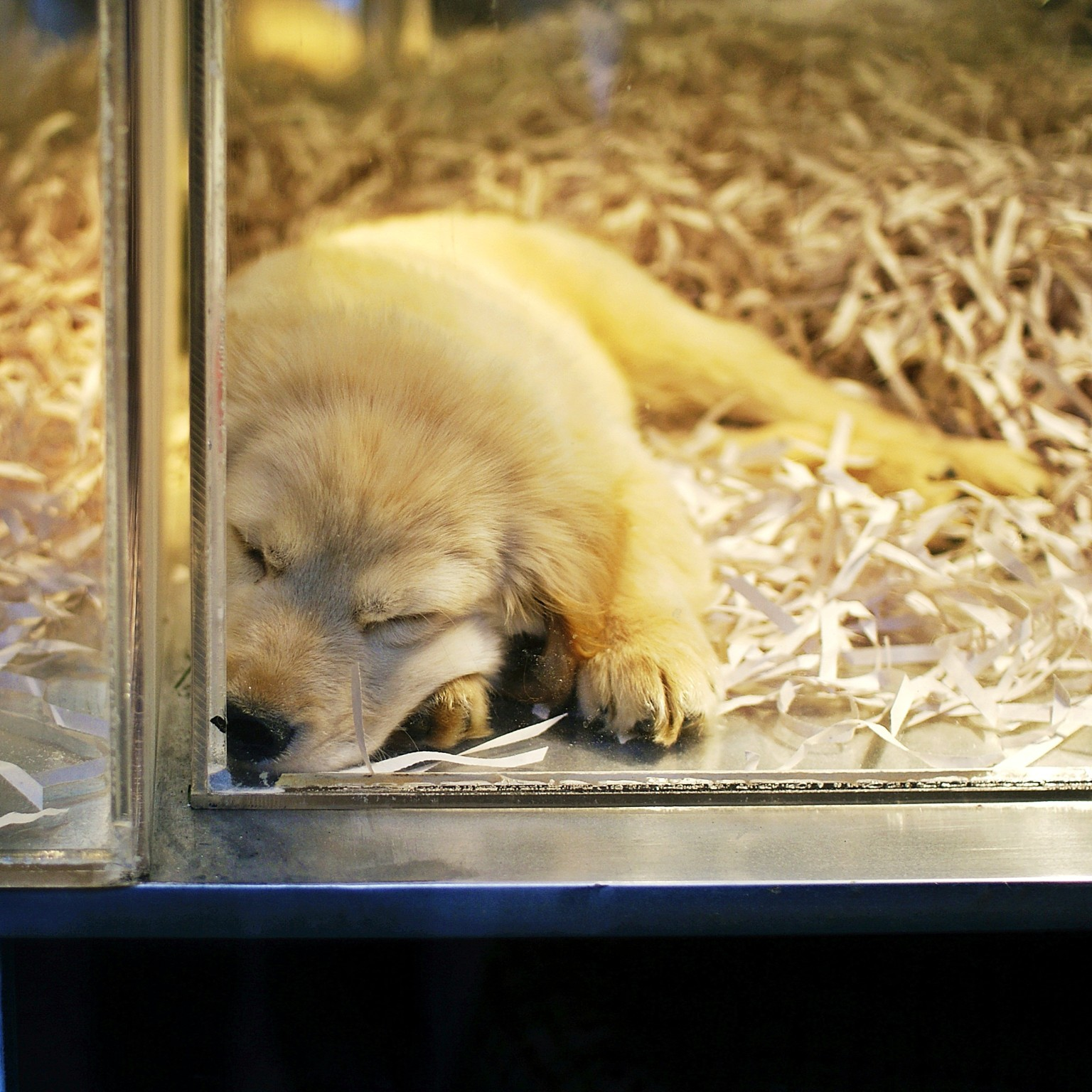 san diego bans pet store sales of dogs and cats in effort. Black Bedroom Furniture Sets. Home Design Ideas