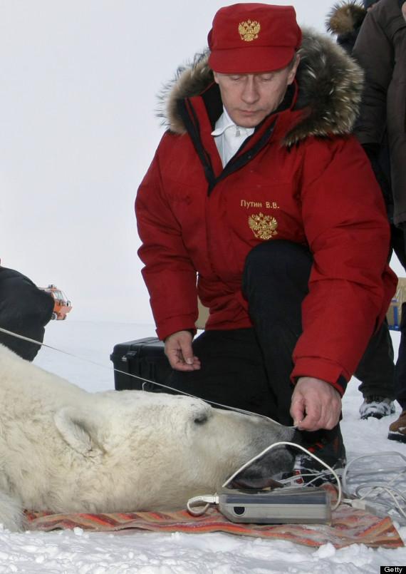 Putin Bear Vladimir putin bearVladimir Putin Funny Bear