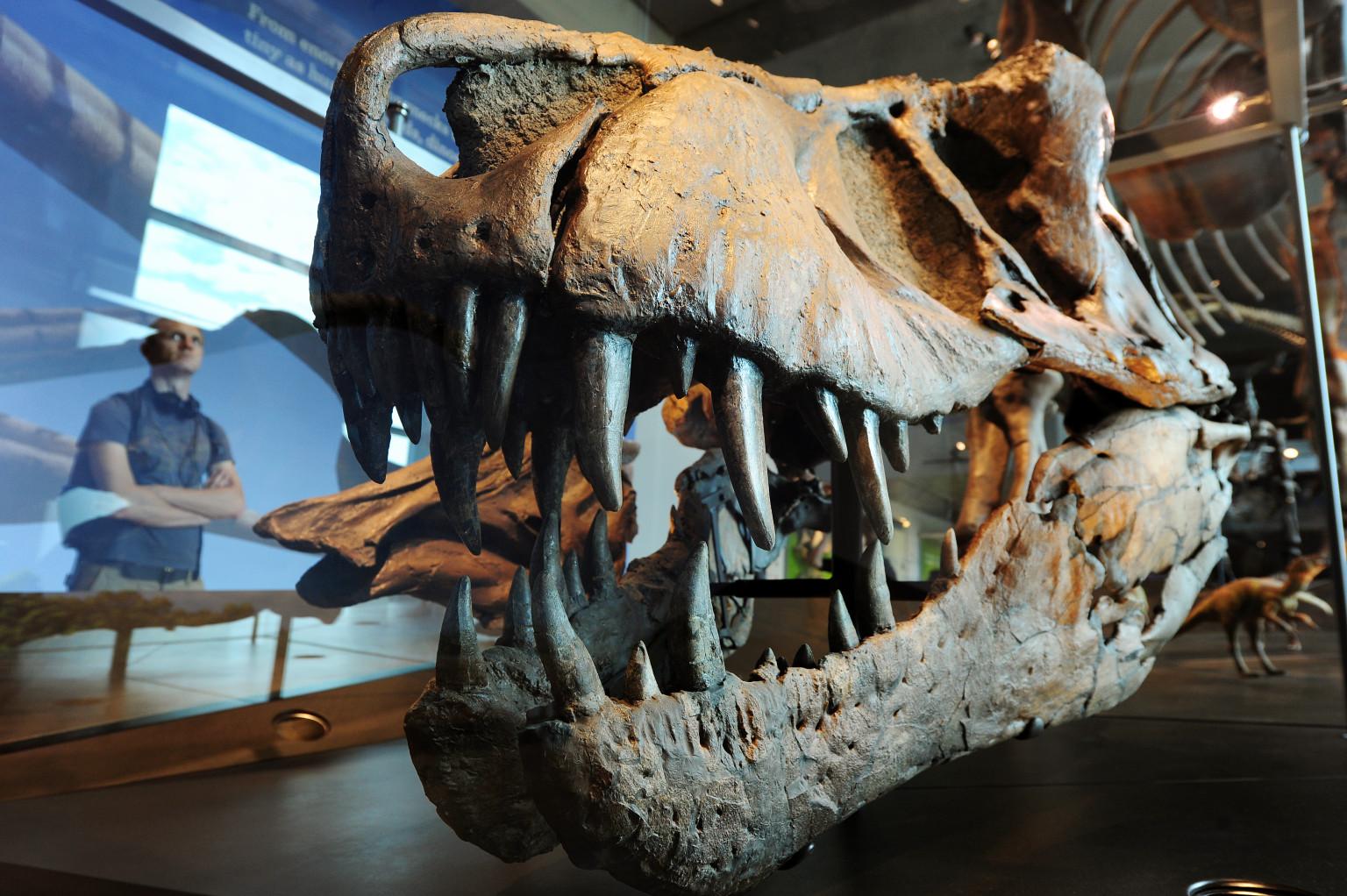 Зубы динозавров фото 2