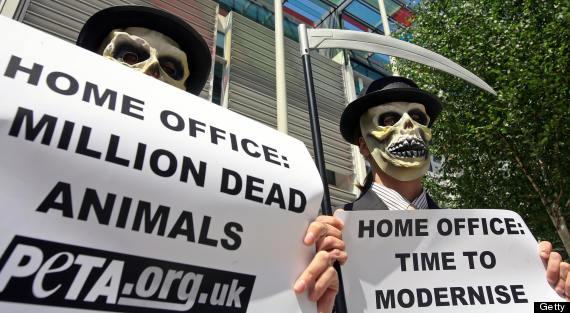 uk animal testing