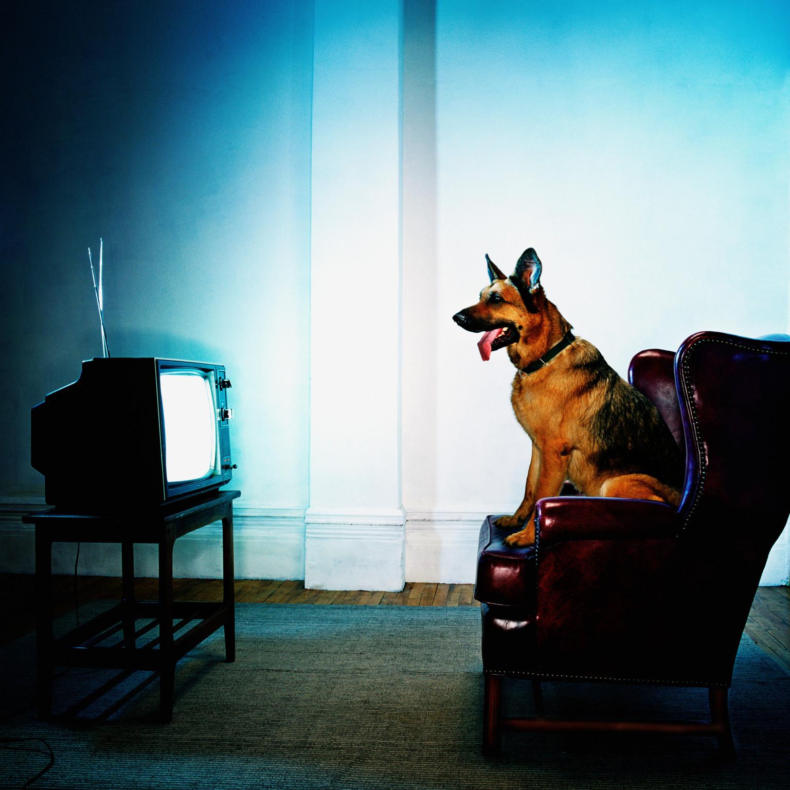 Weird Dog Watching Tv