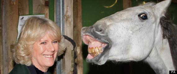 CAMILLA HORSE FUNNY SPLASH