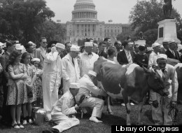 What the... ? Milking a Cow on Capitol Grounds