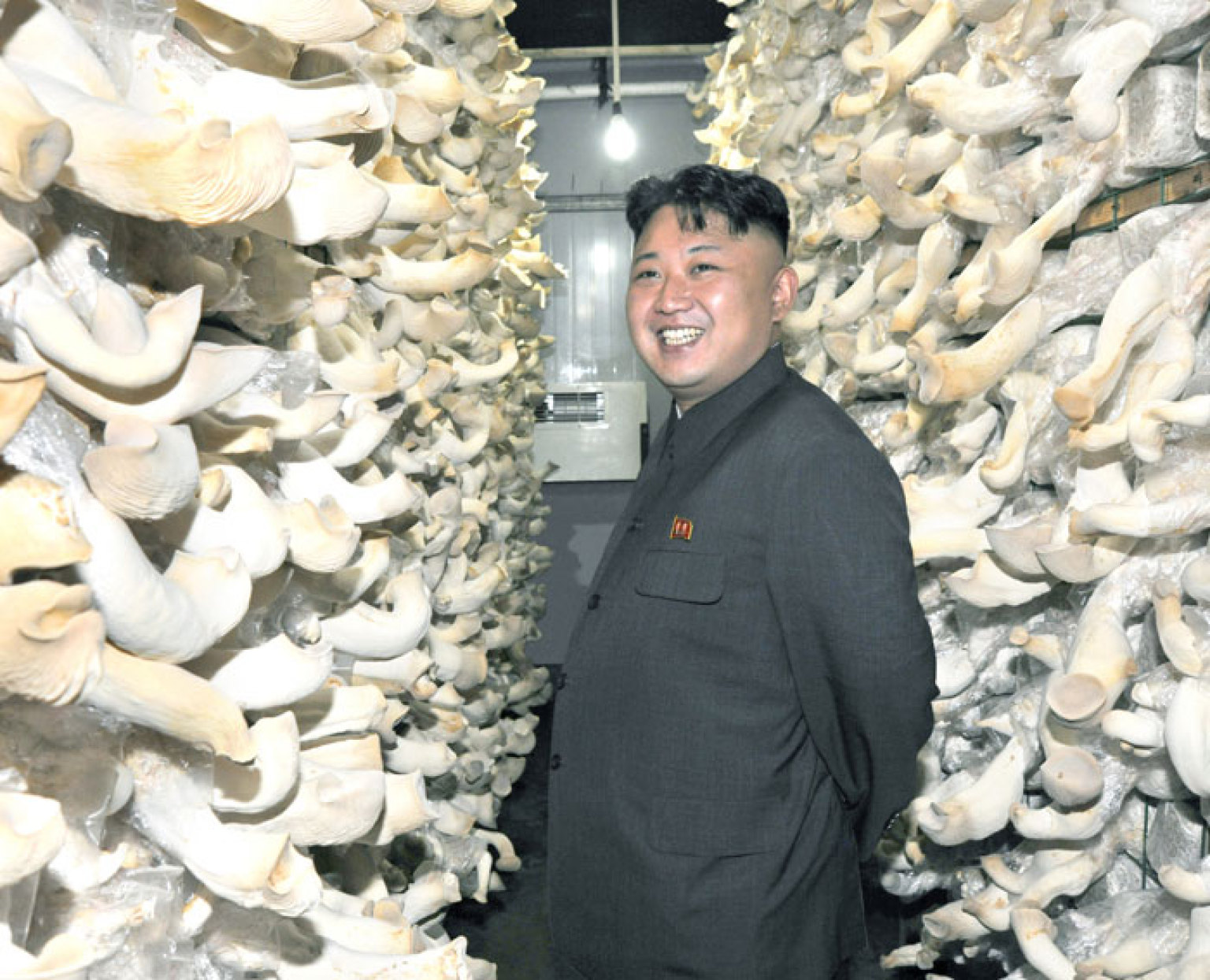 Kim Jong Un Inspects Mushroom Farm, Is All Smiles (PHOTOS ...