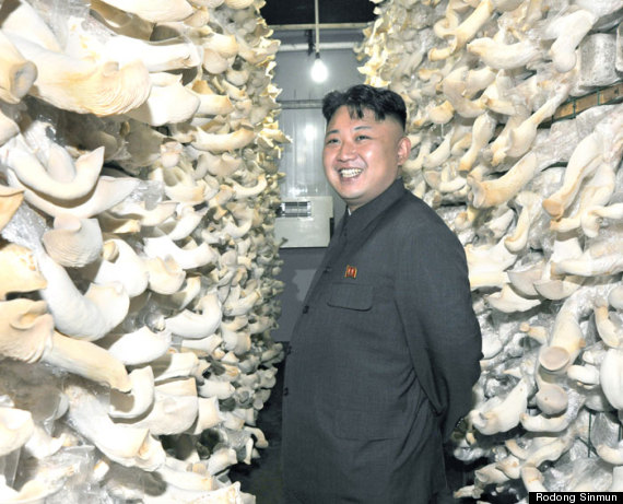 kim jong un mushroom farm