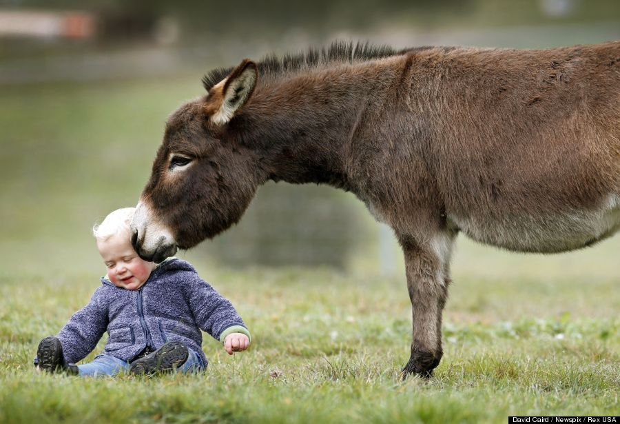 mini donkey 1