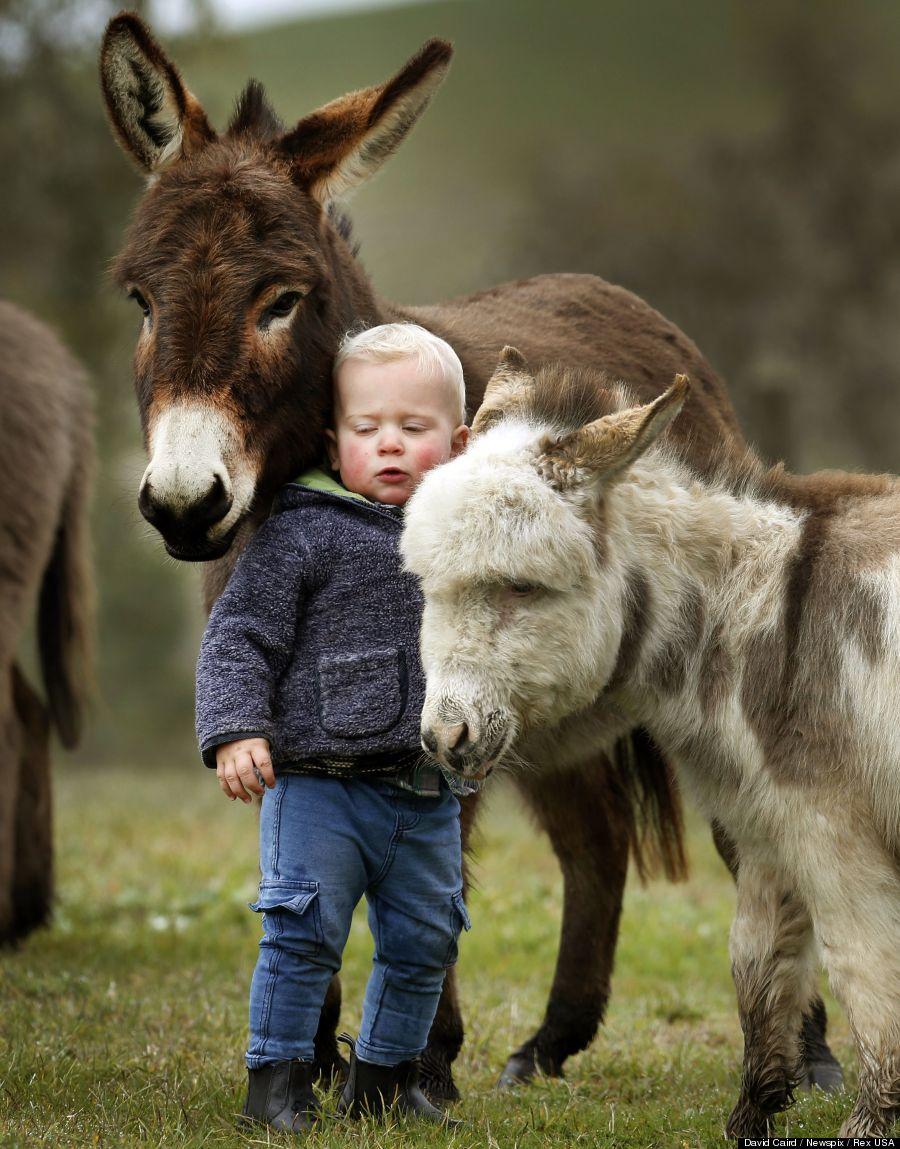 mini donkey 2