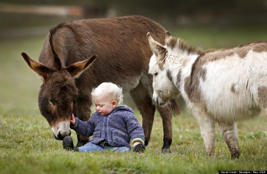 mini donkey 3