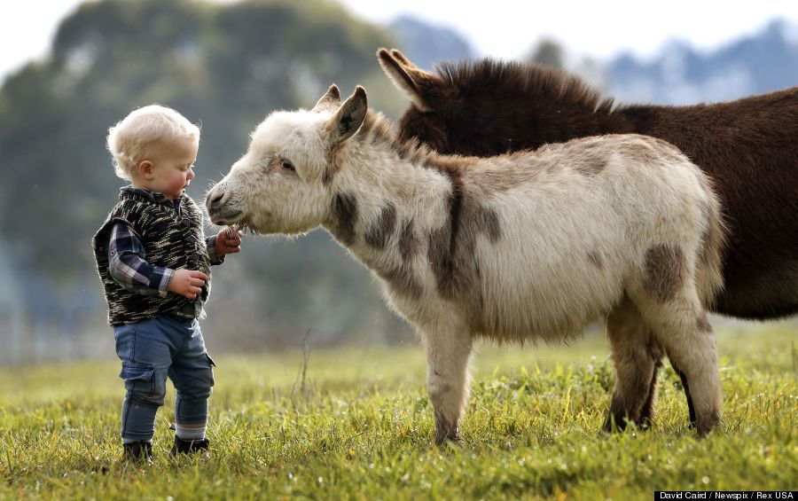 mini donkey 5