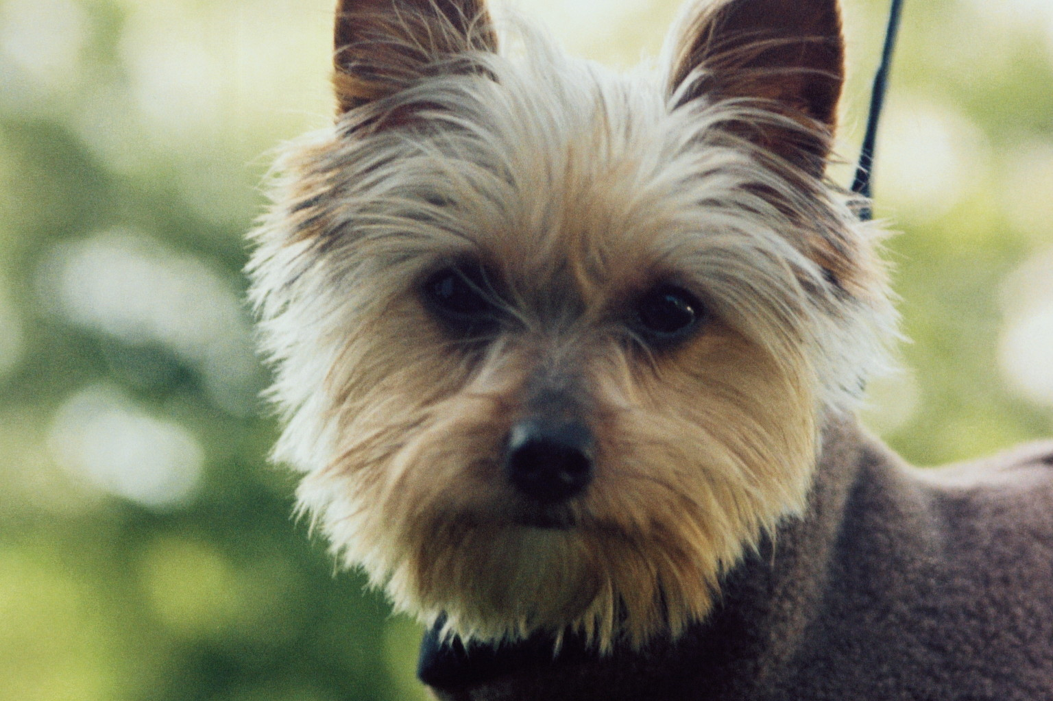top five dogs for inner city living | huffpost uk