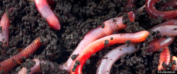 SCARED EARTHWORMS