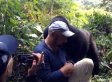 Mark David Of California Got The Best 60th Birthday Present Ever: A Kiss From A Gorilla! (VIDEO)