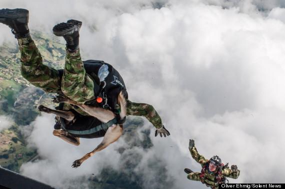 jany the fearless belgian shepherd goes parachutin