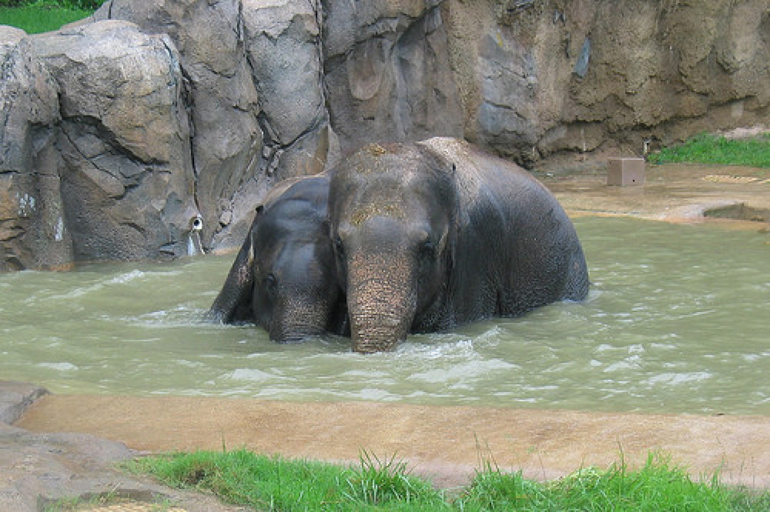 National Zoo Animals Stay Cool During Heat Wave, Look ...