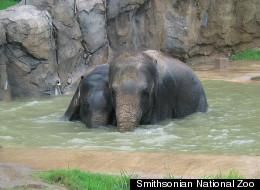 PHOTOS: Zoo Animals Cool Off