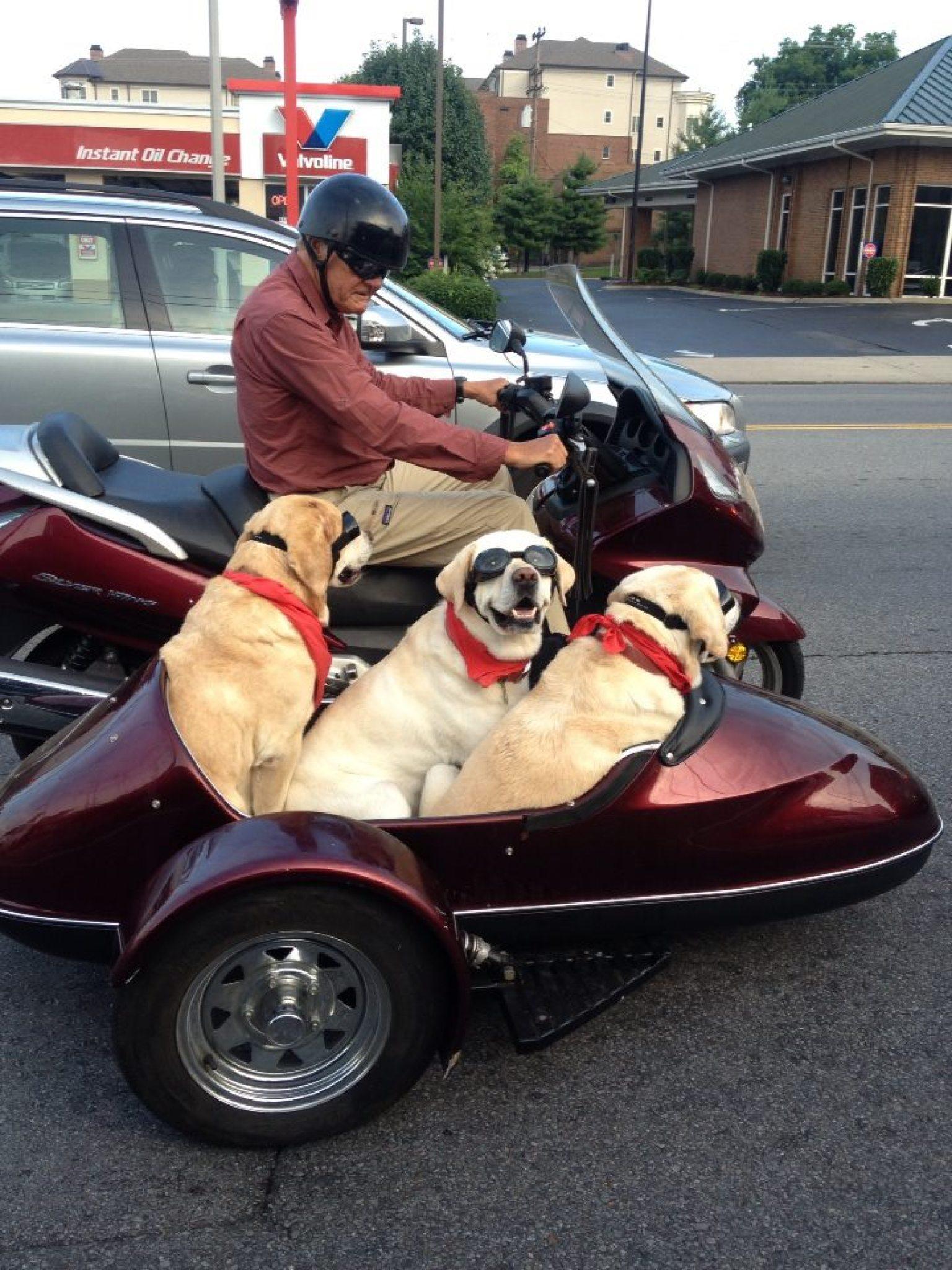 Dogs Ride Sidecar On N...