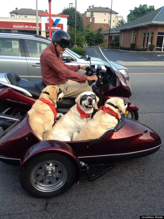 Dogs Ride Sidecar On N...
