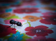 The Best Way To Get Rid Of Ants: Testing Conventional vs. DIY Pest Remedies (PHOTOS)