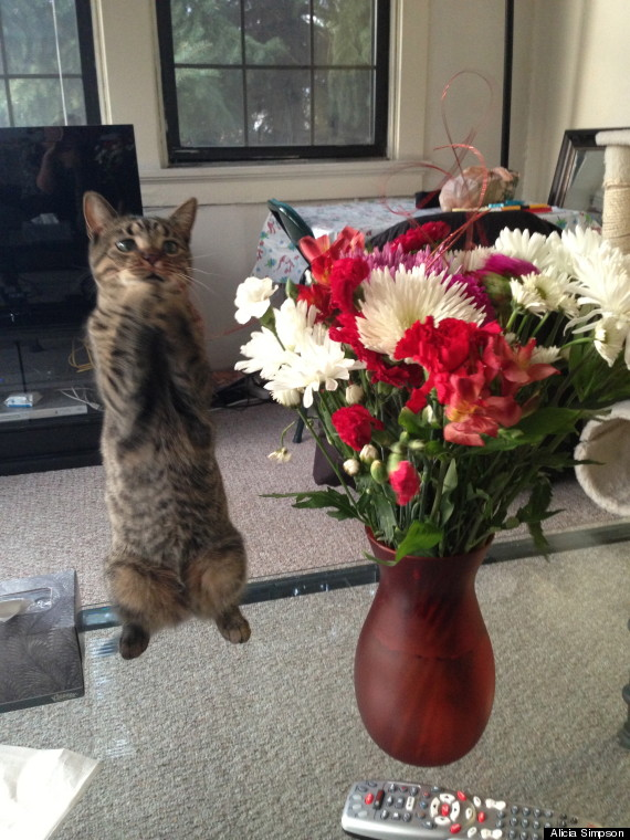 Cat Really Hopes These Flowers Are For Her (PHOTO) | HuffPost