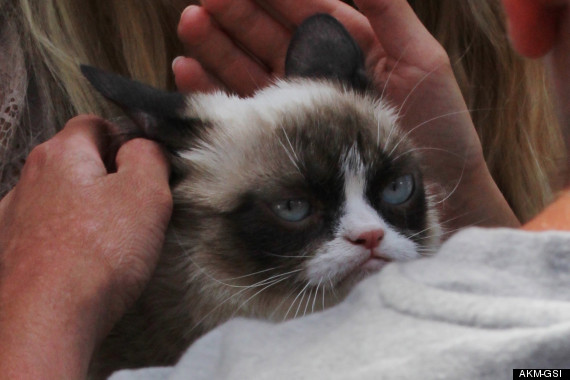 grumpy cat does not - photo #29