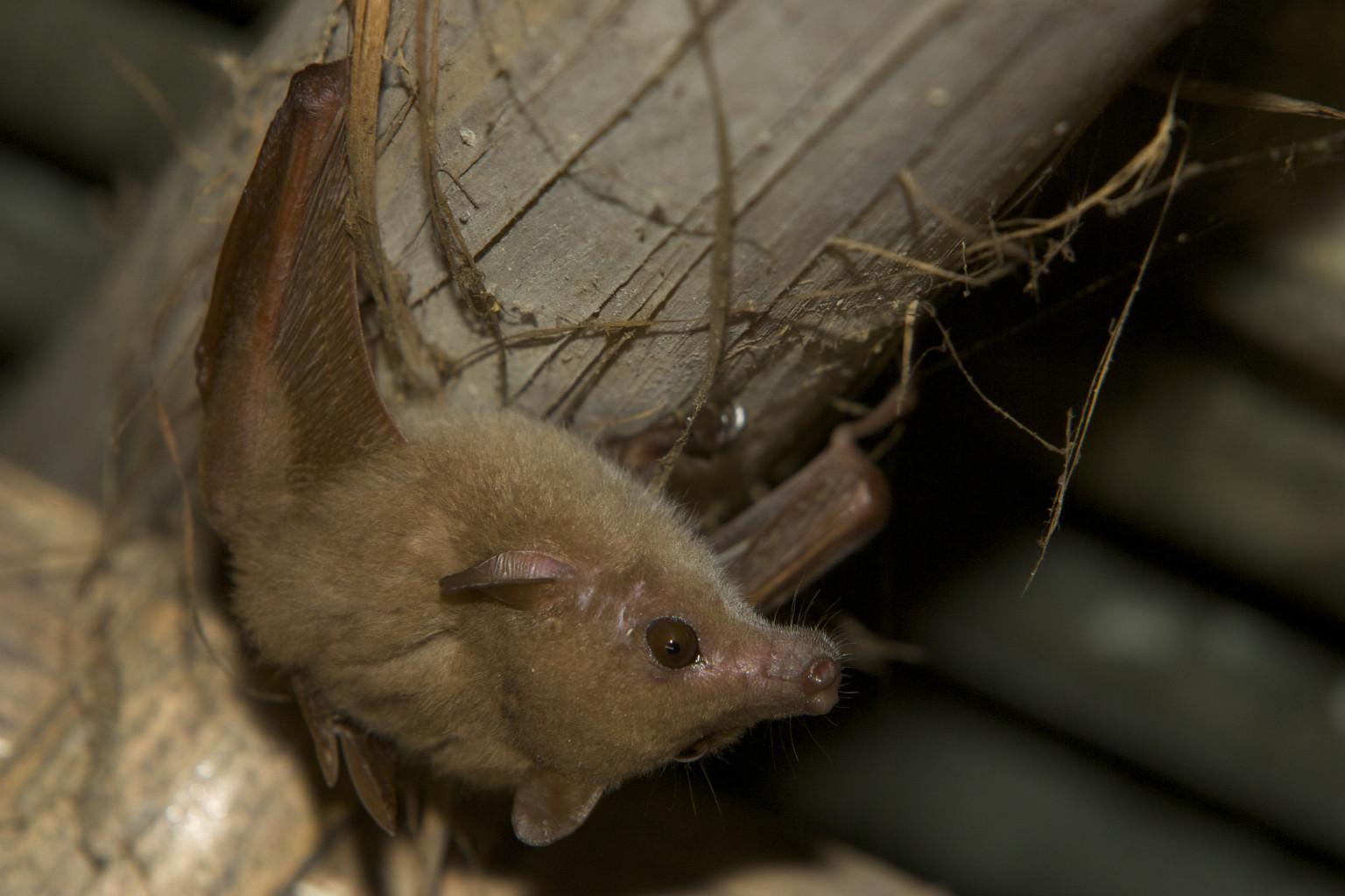 Bat With Rabies Bites Girl In California Causing Warnings Throughout Oakland Huffpost