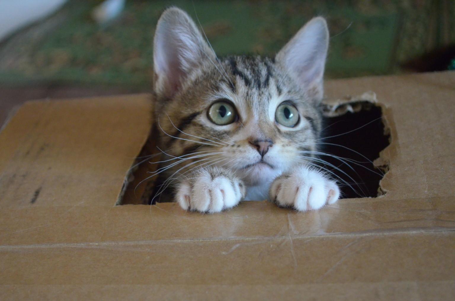 cat jump game