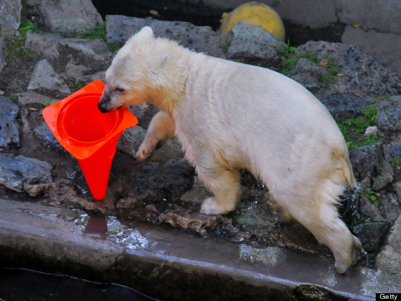 nanuk the polar bear