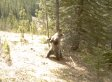 Hidden Camera Shows What Bears Really Do In The Woods (VIDEO)