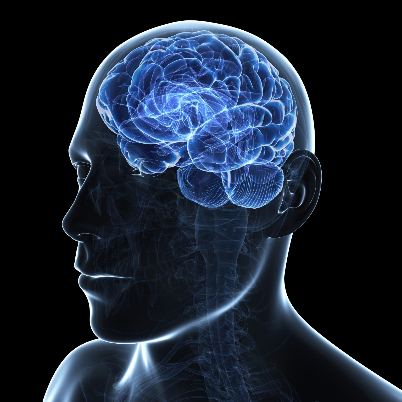 The Male Brain 32