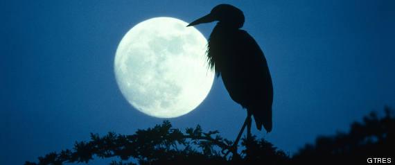 dormir con luna llena