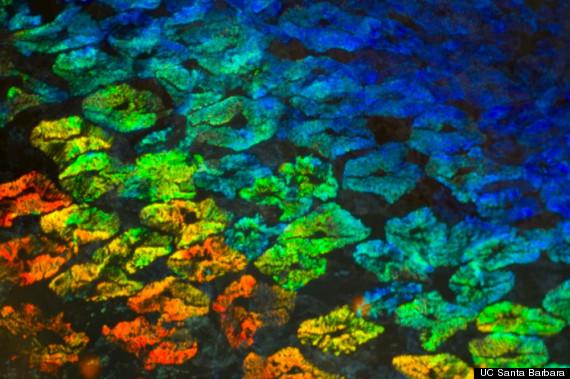 squid colors