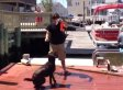 Dog Fails Training Lesson In The Best Way (VIDEO)