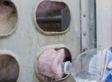 Pigs In Toronto Heat Get Water En Route To Slaughterhouse (VIDEO)