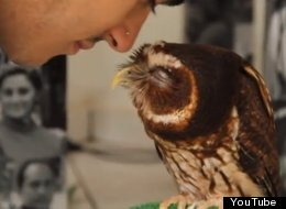 WATCH: Owl Eskimo Kisses Will Melt Your Heart