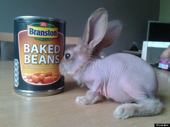 delta mouse bald rabbit