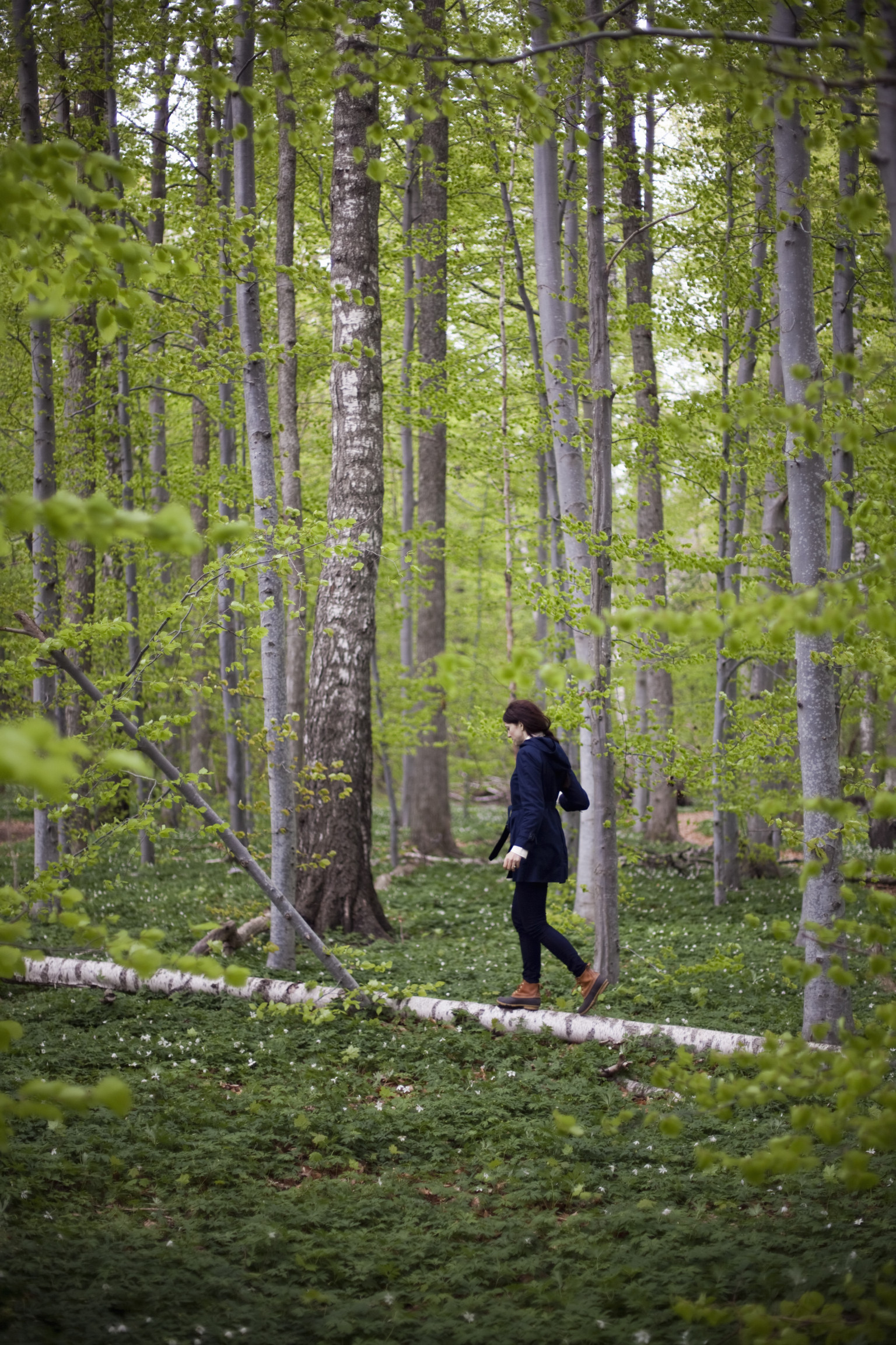 The Woods Wood Be Quiet If No Birds Sang Except The Best: Mindfulness In Everyday Life: A Walk In The Woods And