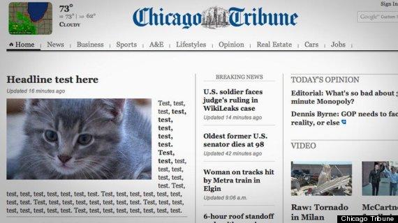 chicago tribune website kitten