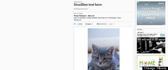 chicago tribune kitten story