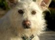 Dog Eats Paralyzed Man's Testicle