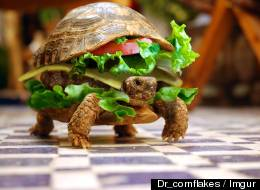 Man Tries Sneak Turtle Disguised As Burger Onto Plane