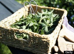 WTF, CSA?: Stinging Nettle Recipes