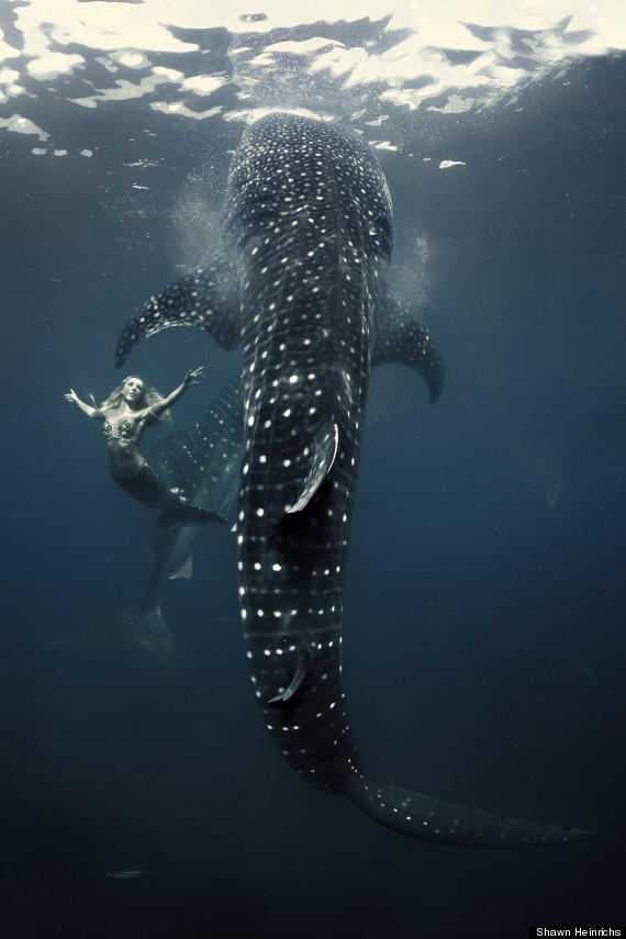 hannah mermaid swimming with whale shark